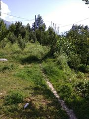 7 Bigha Agriculture land for sale in Manali,  Apple Orchards House
